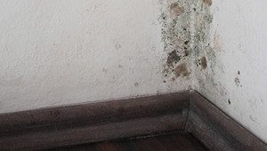 mold and water intrusion