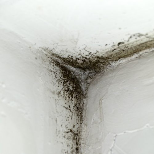 Featured Image For What Is Causing Your Mold Accumulation Issues?